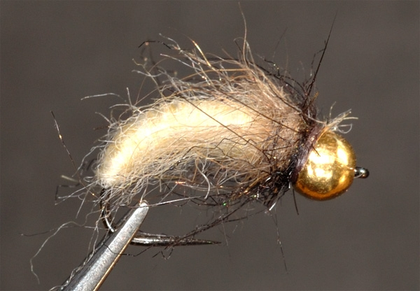 my-caddis-pupa.jpg